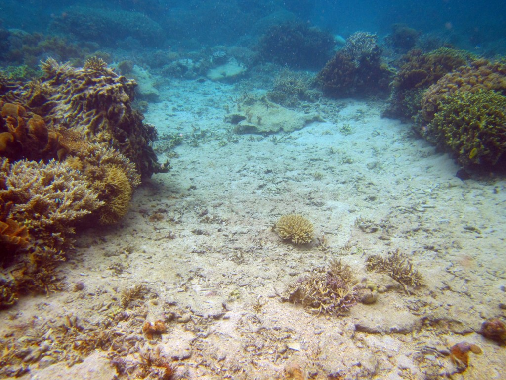 A reef area that is suitable for coral restoration activities. © Reef Explorer Fiji Ltd.