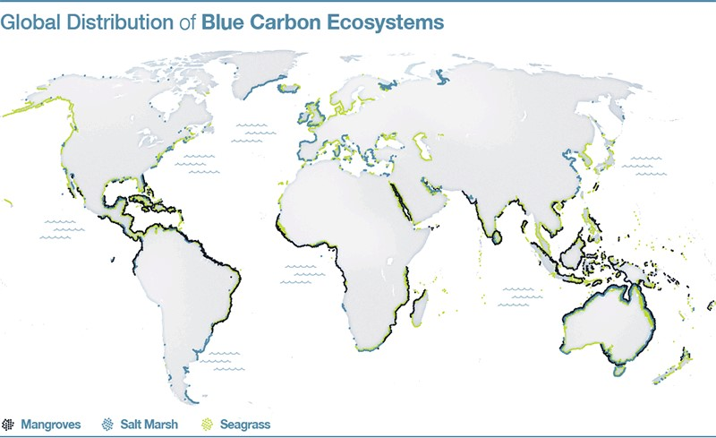 Distribución global de los ecosistemas de carbono azul; Fuente: The Blue Carbon Initiative.