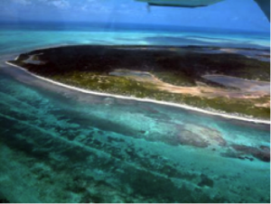 The Anegada Horseshoe Reef. Photo © Shannon Gore
