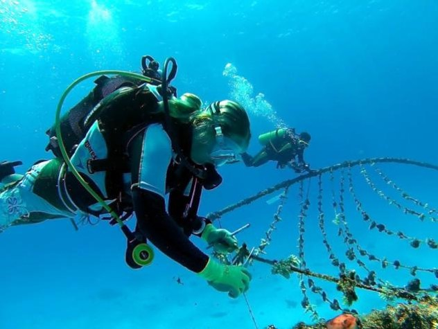 Cleaning the coral nursery. Photo © Reef Rescuers