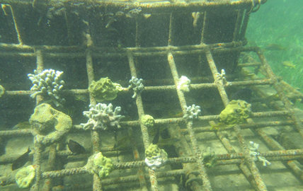 Early view of submerged pilot reef structures in Grenville Bay. Photo © TNC