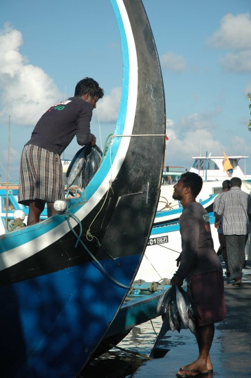 The Maldivian fishing fleet uses traditional artisanal methods. The fleet consists of traditional Maldivian boats, which mainly use rod and line fishing for yellow fin tuna and reef fishes, making it one of the last remaining relatively sustainable fishing fleets. Photo credit: Alex Barron