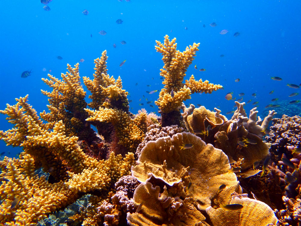 Coral reefs work as nature's sea walls – It pays to look after them