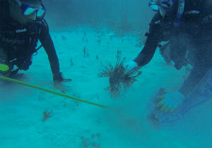 Lionfish Collection Bahamas