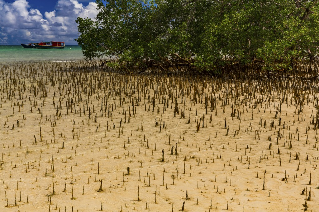 Debt restructuring in the Seychelles will provide funding to support adaptation to climate change through improved management of coasts, coral reefs and mangroves. Photo credit: Jason Houston