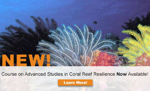 New Reef Resilience Online Course Launched