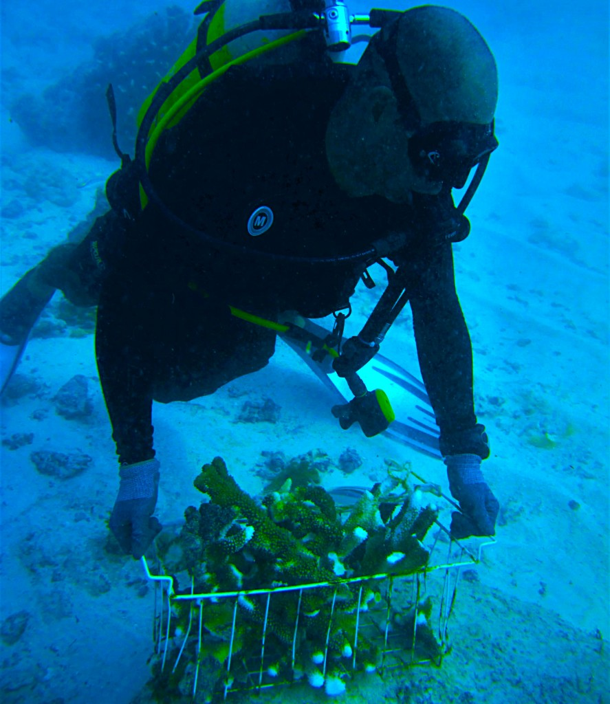Transporting coral fragments. Photo © Reef Rescuers