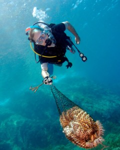 A diver collects Crown-of-Thorn starfish as part of a Project AWARE underwater cleanup event held at Tenggol Island, Malaysia. Photo © 2010 Mohd Halimi Abdullah/Marine Photobank