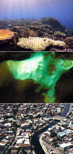 Bleaching can be caused by a host of human-induced and natural factors such as (top) intense sunlight combined with elevated water temperature; (middle) diseases caused by bacteria, fungi, and viruses; and (bottom) coastal pollution that reduces water quality and increases susceptibility to bleaching. Photos top to bottom © Great Barrier Reef Marine Park Authority, D. Obura, M. Erdman