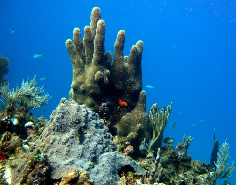 Récif corallien à Saint-Martin. Photo © Nature Foundation St. Maarten