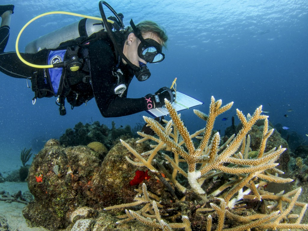 Monitoring corals on a coral tree floating structure. Photo © John Melendez