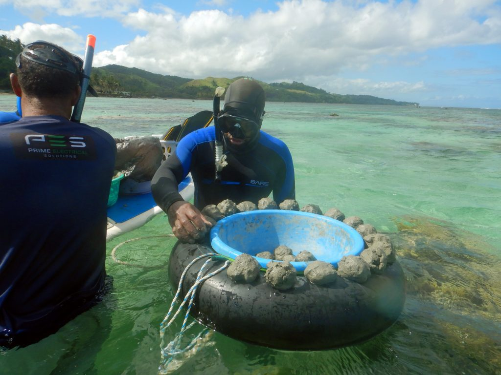 As we generally work in high-energy environments, corals need to be fixed in place in order to reattach themselves to the reef. Our preferred method for doing this is to use a mixture of cement, plaster, and fine beach sand while the tide is low and water movement is limited. The mixture is made into balls, placed on brushed substrate, and new corals placed partially on the cement. Photo © Reef Explorer Fiji Ltd.