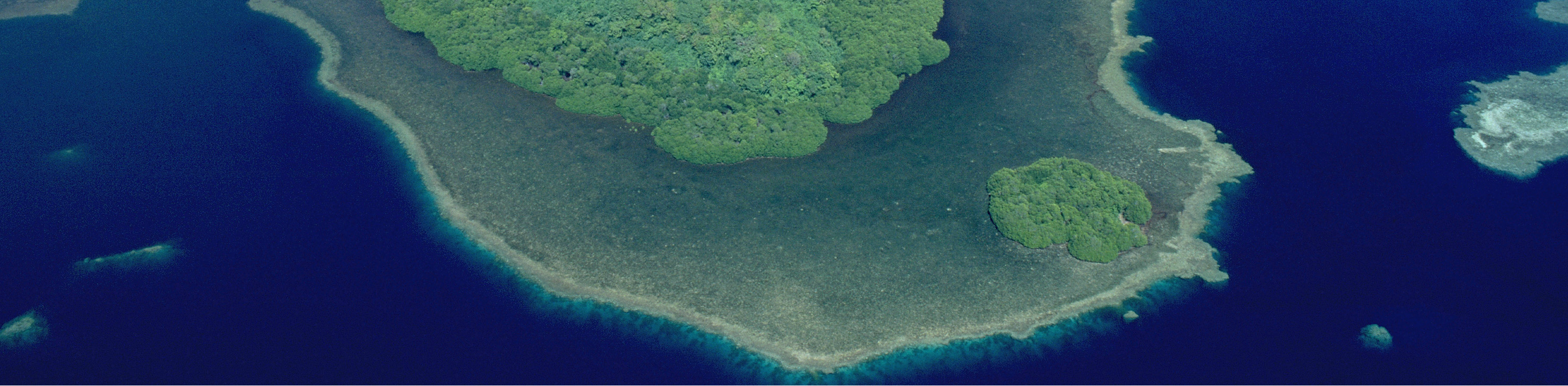 Aerial view of reef and mangrove in Pohnpei, Micronesia. Photo © Jez O'Hare