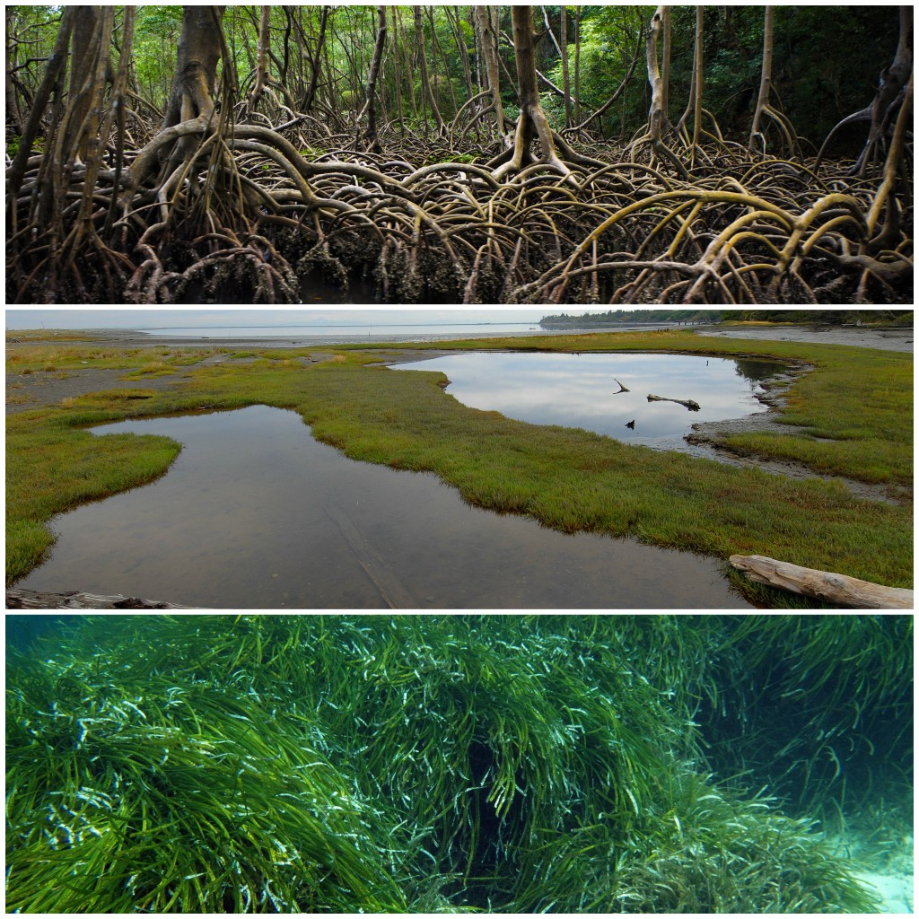 Blue carbon ecosystems