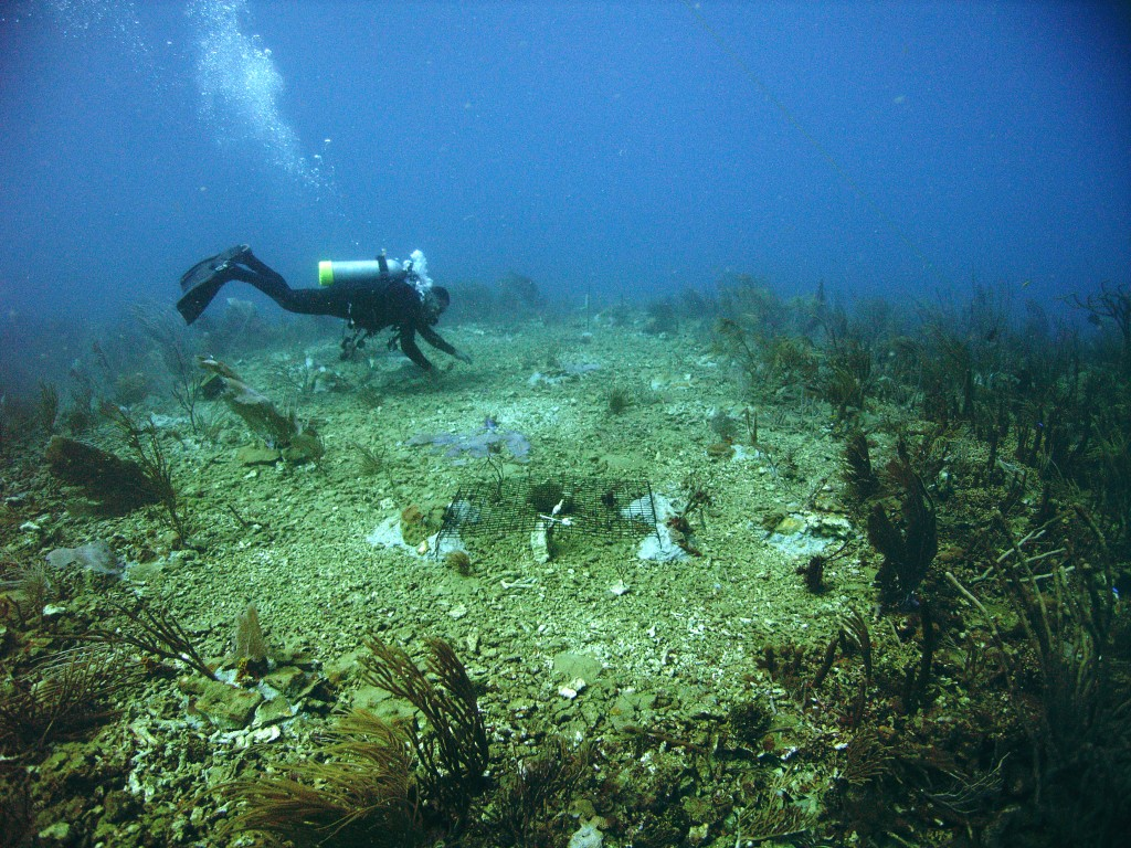 Foto © NOAA Restauratiecentrum
