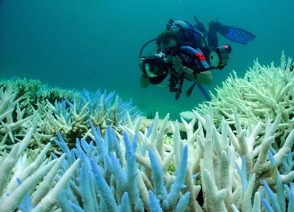 Monitoring bleaching in Keppel Islands, Australia. Photo © Paul Marshall
