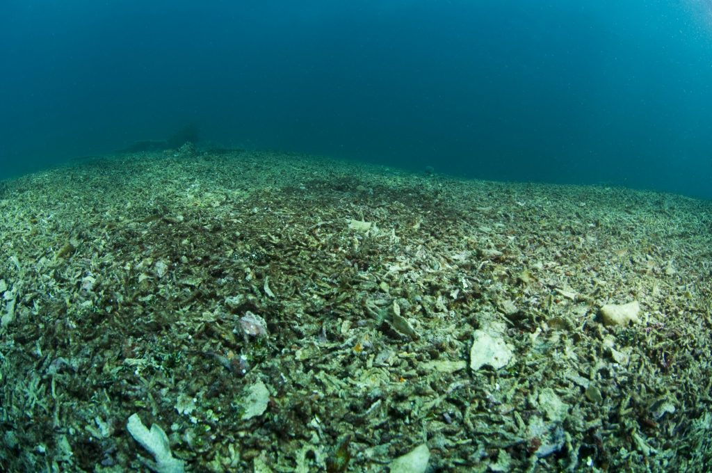 Reef bombed for fishing in Indonesia. Photo © Jeff Yonover
