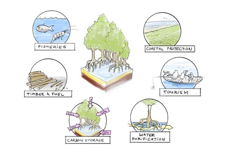 マングローブが提供する生態系サービス
