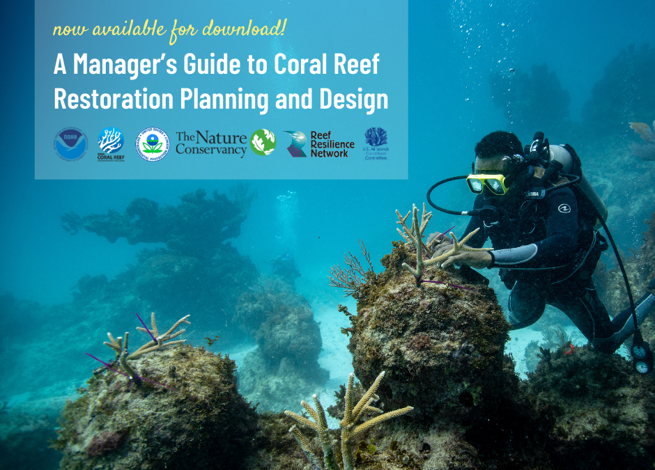 New Guide for Reef Managers