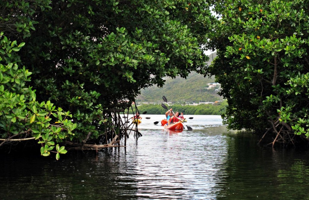 Sea level rise will impact mangrove forests and critical functions that they serve, such as storm surge mitigation. Photo © Brenda Sylvia