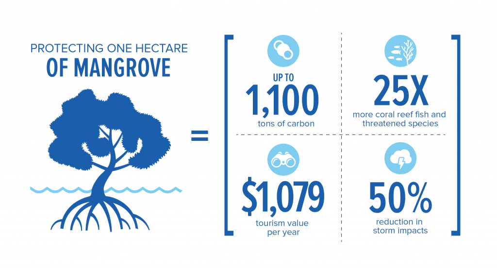 Benefits of protecting one hectare of mangrove forest