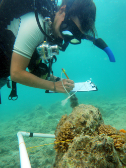 Reef ecosystem health monitoring can provide managers with practical information on reef communities and status. Photo © S. Kilarski