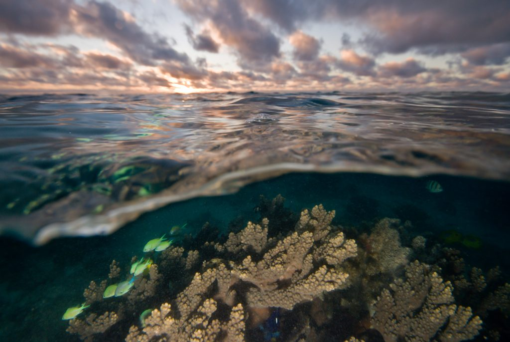 Acropora coral and blue green chromis on Ningaloo Reef in Western Australia. Photo © Steve Lindfield