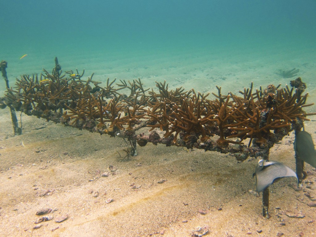 Example of a PVC Array fixed to the substrate. Photo © Elizabeth Goergen, NOVA Southeastern University