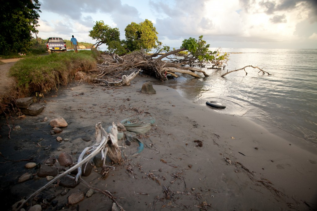 Remnants of an old pier and mangrove being inundated by rising sea level