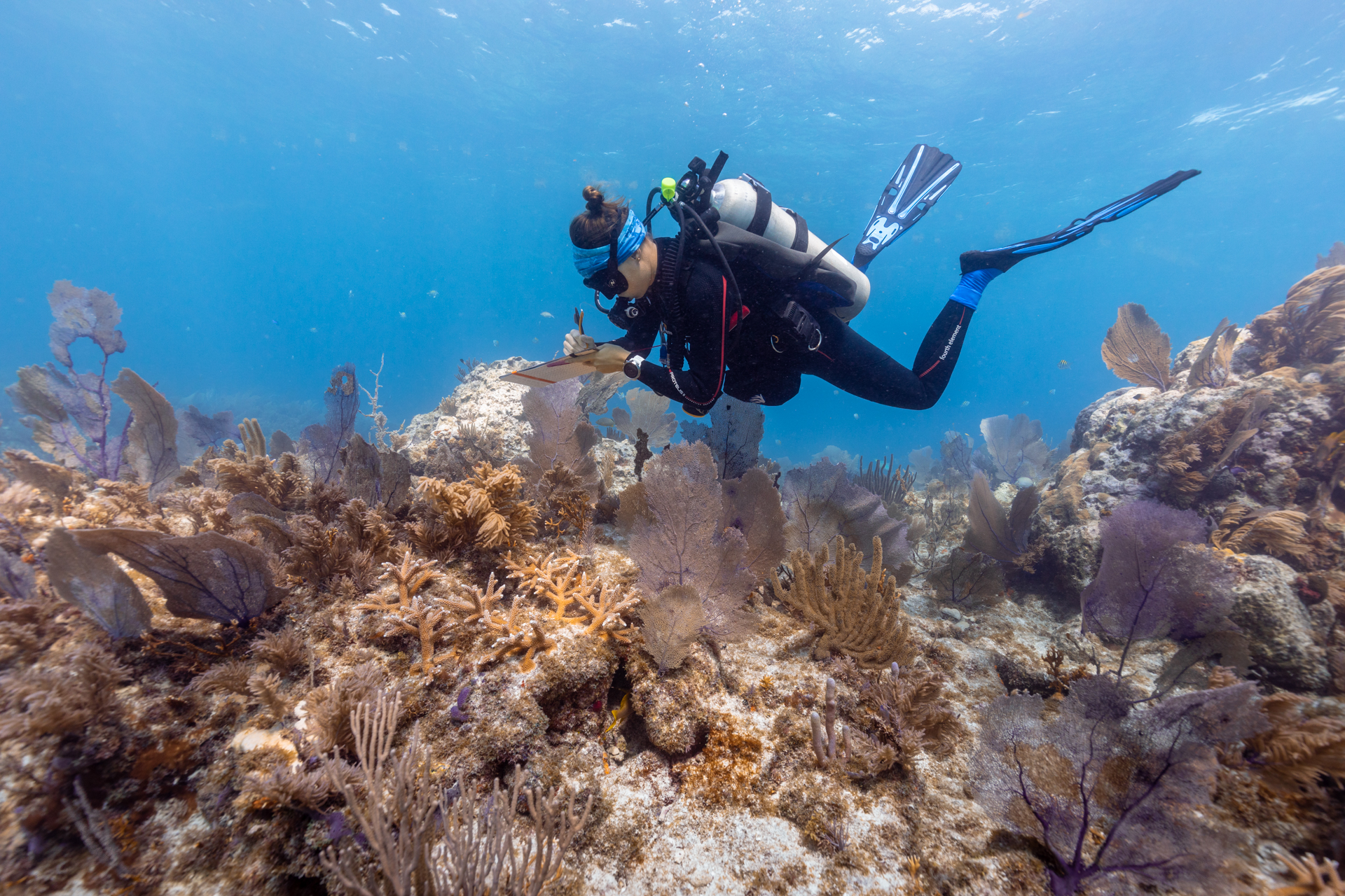 Scuba Diving Coral Restoration Foundation