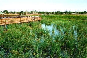 Wastewater Treatment Wetland