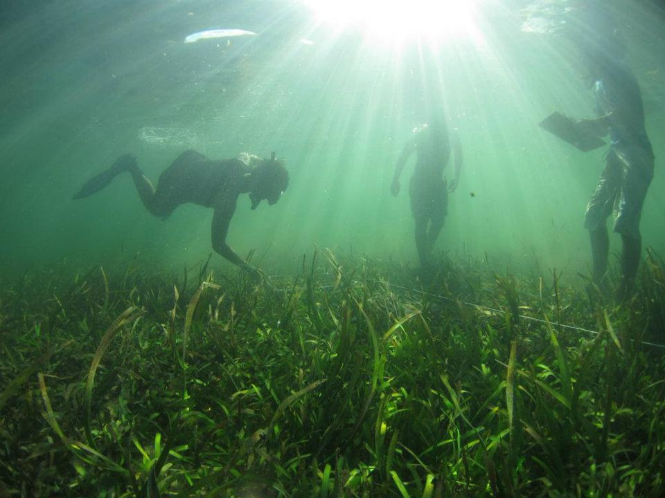 Monitoring seagrass beds. Photo © Nimpal Channel MCA.