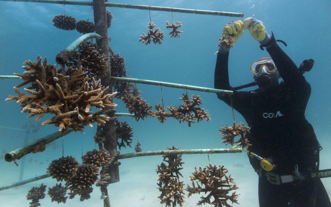 دراسات حالة جديدة لاستعادة الشعاب المرجانية