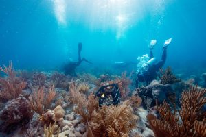 Outplanting corals in the dry tortugas, Florida, USA