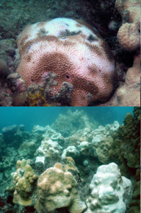 During bleaching events, managers can establish temporary closures around impacted areas to help prevent further damage from human impacts. Photos © Joe Bartoszek 2010/Marine Photobank (top); Craig Quirolo, Reef Relief/Marine Photobank (bottom)