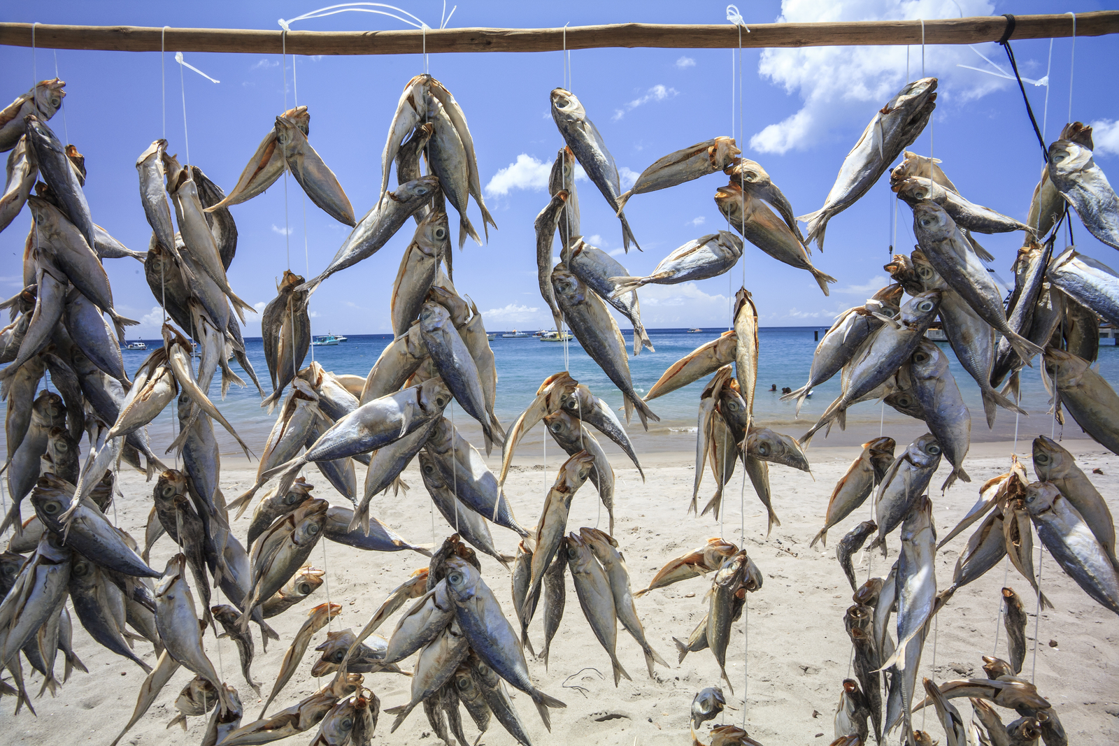 Saltfish drying on the beach at Gouave, one of the fishing communities on Grenada. Photo © Marjo Aho