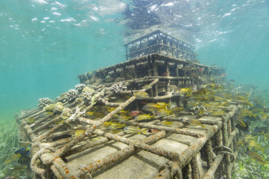Pilot hybrid or 'artificial' reef structures, built with steel cages and filled with stones and cement, were installed in 2015 in Grenville Bay, Grenada to protect a vulnerable coastline from strong wave action and the impacts from climate change, such as severe erosion. The pilot structures are successfully hosting marine life, coral fragments and crusting over with coralline algae. Photo © Tim Calver