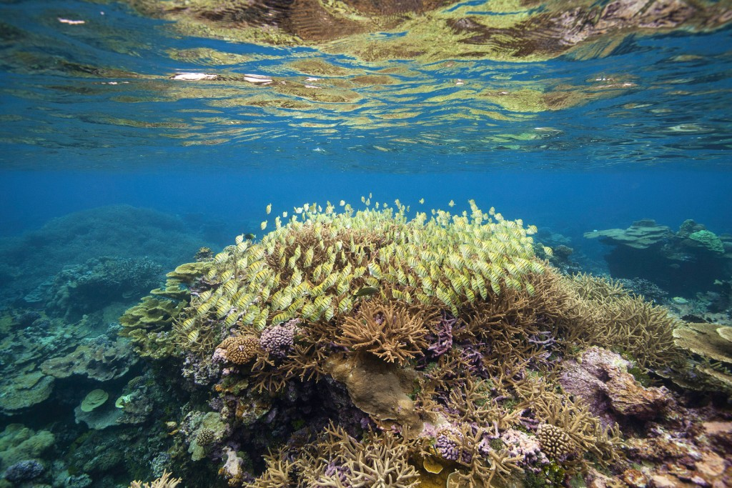 Restoration projects should seek the long-term recovery of habitats and ecosystem processes, such as recruitment of reef organisms and reef accretion, to promote healthy coral reef populations and ecosystem states. Photo © Tim Calver