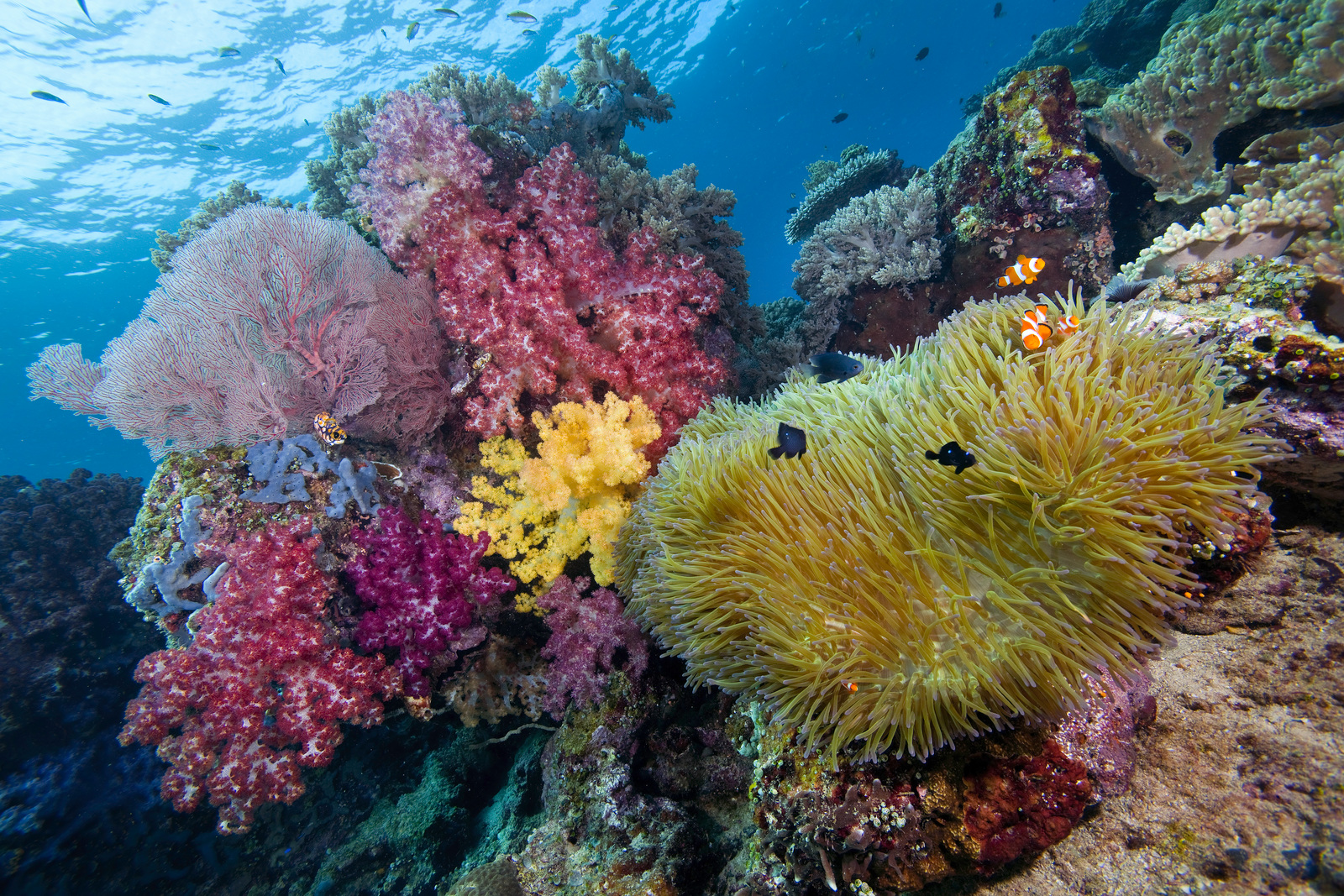vibrant colors of a reef